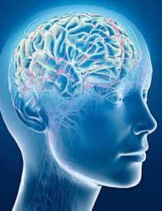 The Brain Habits for Health